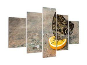 Obraz motýla (V020454V150105)