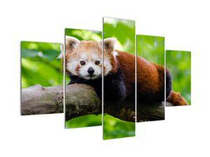 Tablou cu panda roșie (V020455V150105)