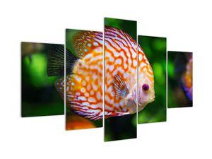 Tablou cu pește (V020473V150105)