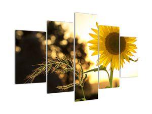 Slika sončnice (V020543V150105)