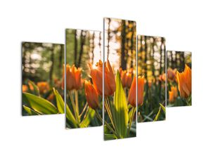 Obraz - oranžové tulipány (V020552V150105)
