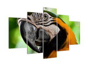 Tablou  cu papagal (V020561V150105)
