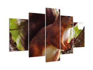 Tablou cu veverița (V020573V150105)