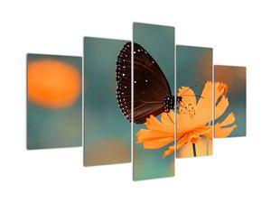 Obraz - motýl na oranžové květině (V020577V150105)