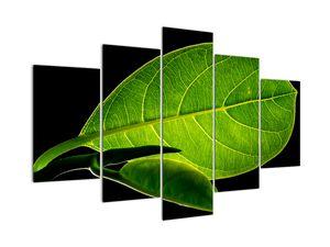 Tablou - frunză verde (V020628V150105)