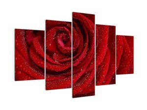 Obraz - detail růže (V020684V150105)