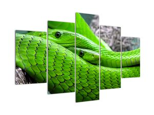 Obraz zelených hadov (V020689V150105)
