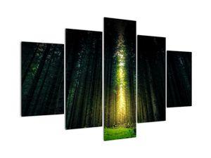 Obraz temného lesa (V020705V150105)