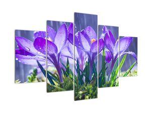 Obraz květin v dešti (V020707V150105)