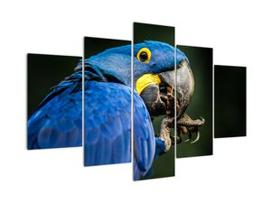 Obraz papouška (V020714V150105)