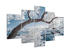 Obraz zasněženého stromu u vody (V020718V150105)
