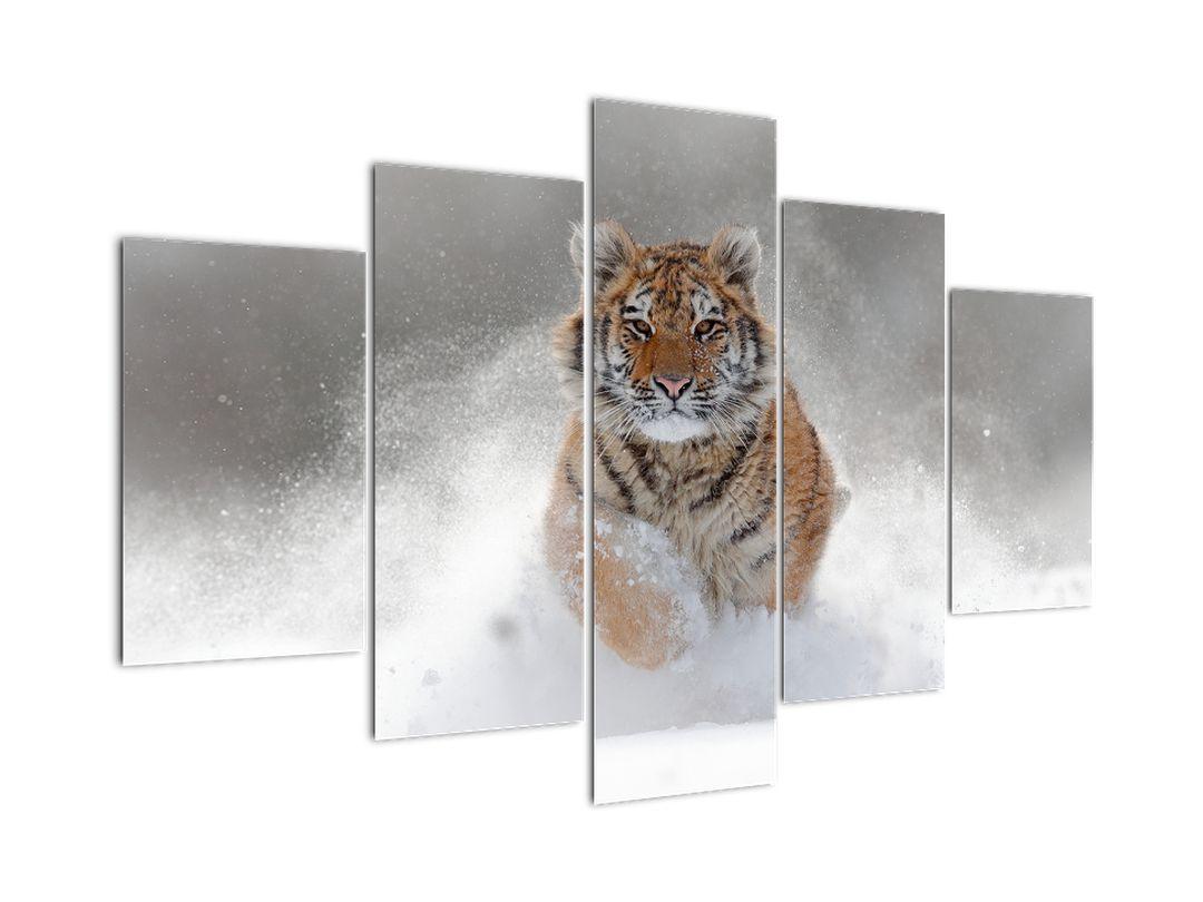 Obraz běžícího tygra ve sněhu (V020719V150105)