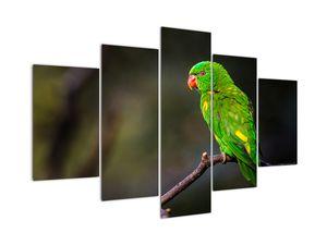 Obraz papagája na vetve (V020833V150105)