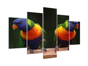 Obraz papagájov (V020865V150105)