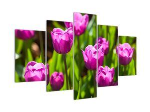 Tulipánok a réten képe (V020893V150105)