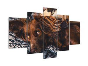 Obraz ležiacich psov (V020897V150105)