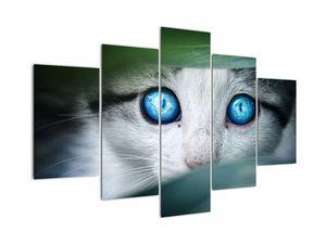 Obraz mačky (V020944V150105)