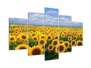Slika sončničnega polja (V020946V150105)