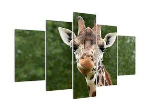 Obraz žirafy (V020969V150105)