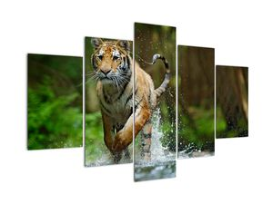 Obraz běžícího tygra (V020979V150105)