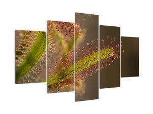 A növény képe (V020984V150105)