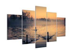 Obraz labutí na vodě v mlze (V020989V150105)