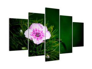 Obraz ružového kvetu (V020990V150105)