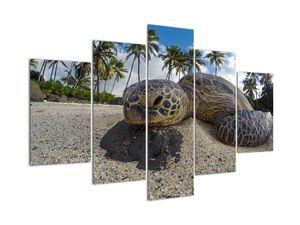 Obraz korytnačky (V020992V150105)