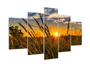 Slika polja pri zalasku sunca (V021001V150105)