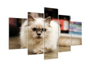 Obraz bielej mačky (V021124V150105)