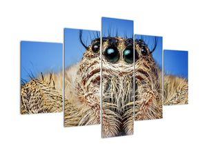 Obraz detailu pavouka (V021134V150105)