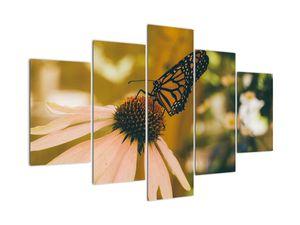 Obraz motýla na květině (V021201V150105)