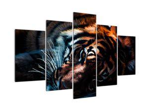 Slika ležećeg tigra (V021214V150105)