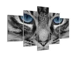 Obraz kočky (V021221V150105)
