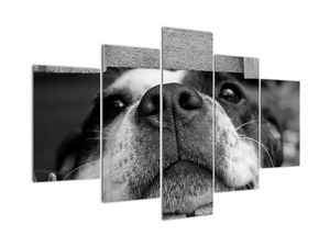 Obraz psa (V021230V150105)