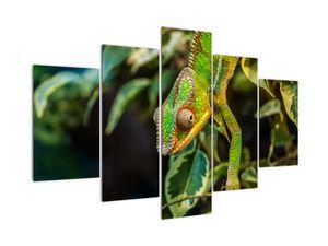 Obraz chameleona (V021236V150105)