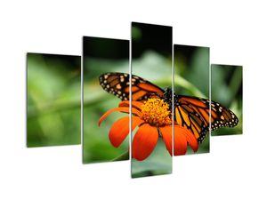 Obraz motýla na květině (V021244V150105)