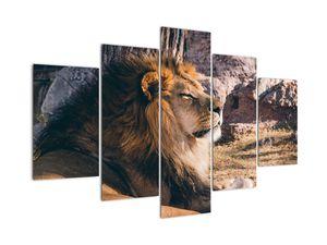 Slika ležećeg lava (V021249V150105)