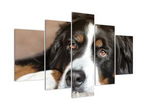 Slika psa (V021268V150105)