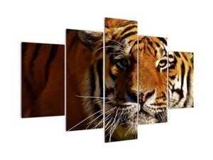 Obraz tygra (V021272V150105)