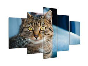 Obraz - Mačka domáca (V021323V150105)