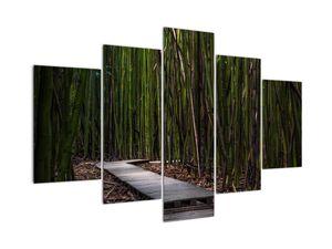Obraz - Medzi bambusy (V021324V150105)