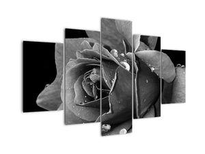 Slika ruže - crno-bijela (V021394V150105)