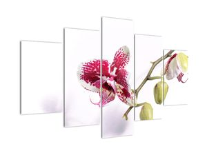 Slika cvijeta orhideje (V021552V150105)