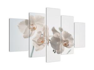 Tablou cu orhidee albă (V021557V150105)