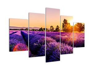 Obraz levandulového pole, Provence (V021590V150105)