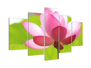 Tablou cu flori de lotus (V021697V150105)