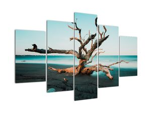 Slika - Naplavine na plaži (V021723V150105)