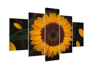 Slika - Sončnica in cvetni listi (V021736V150105)