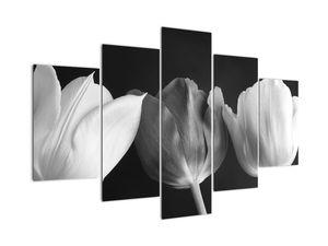 Obraz - Černobílé květy tulipánů (V021916V150105)